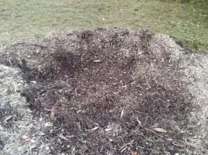 Blanding af flis og jord, efter bortfræsning af stor rod.